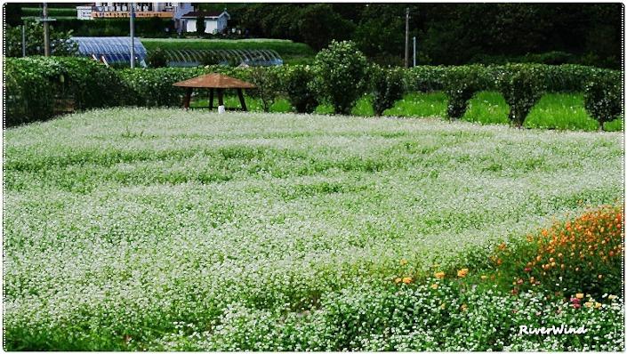 메밀꽃 피는계절에..::OmnisLog