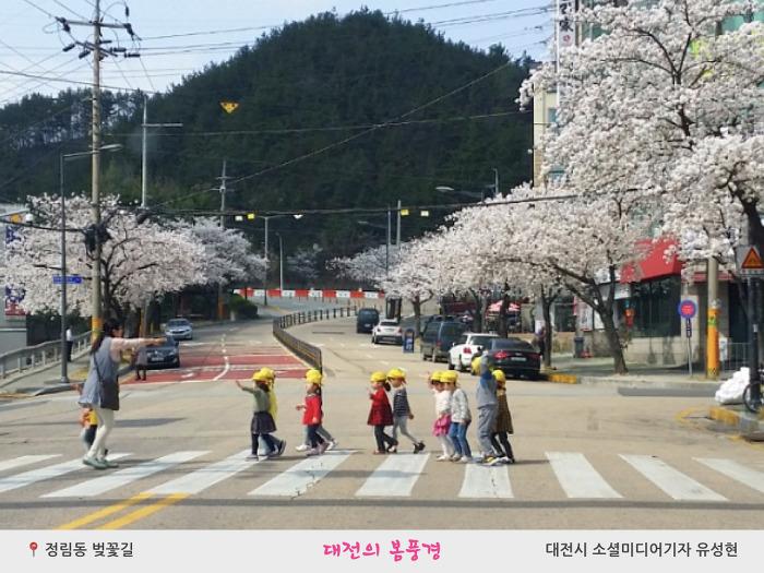 정림동 벚꽃길