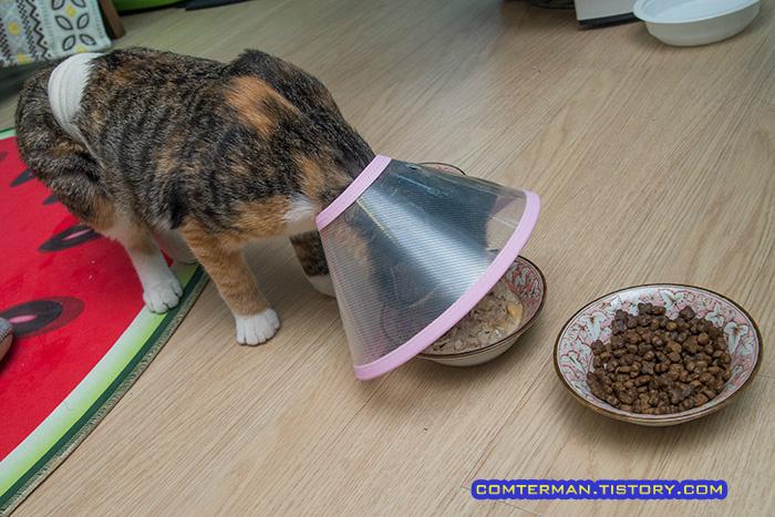 고양이 넥카라 밥그릇