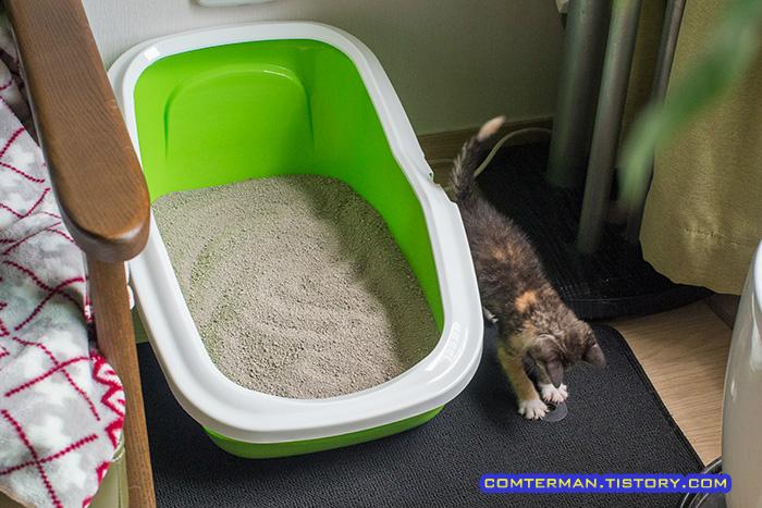고양이 용품 사빅 아세오 화장실