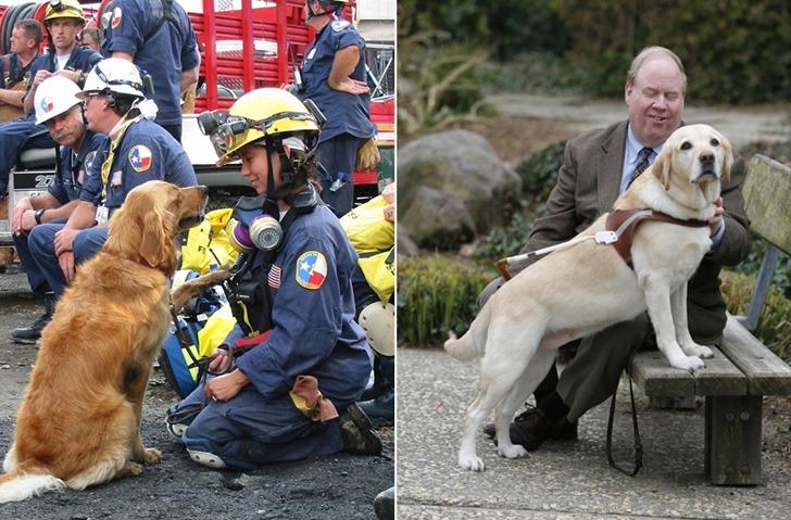 웬만한 사람보다 낫다는 영웅적인 개들