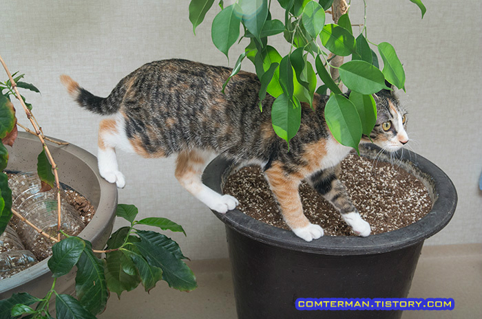 고양이 화분 올라가는 버릇
